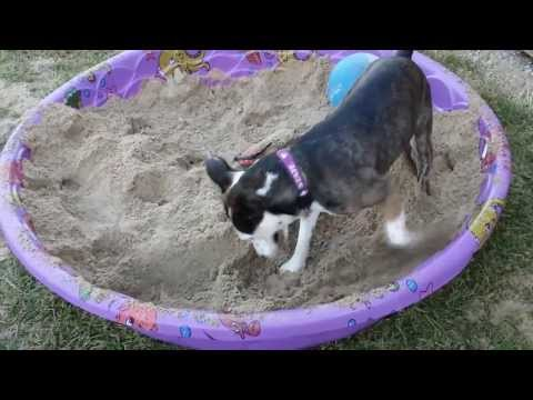 How to keep your dog from digging up the yard.