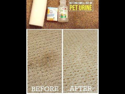 How to cleaning dog urine from carpet with vinegar and baking soda