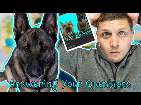 Why does my german shepherd eat rocks!? - plus other questions subscribers submitted