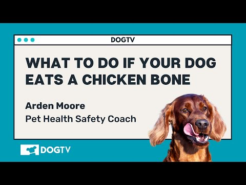What to do if your dog eats a chicken bone