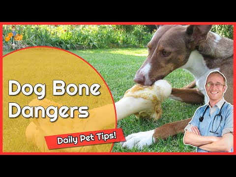 Should you give dogs bones? - daily pet tips