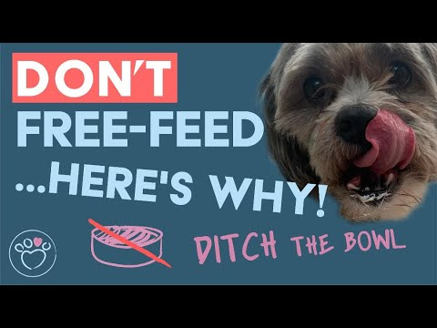 Don't free feed your dog... here's why