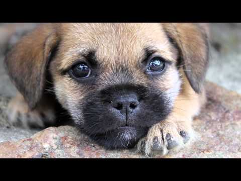 Homemade 101: why does homemade dog food need nutrient supplements?