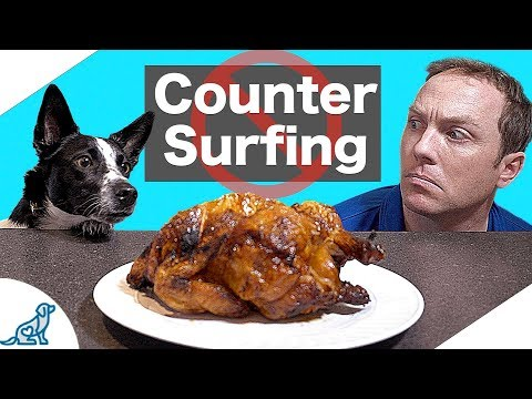 How to stop dog counter surfing - professional dog training tips
