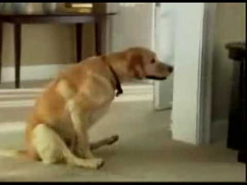 Funny compilation of dogs wiping their bums