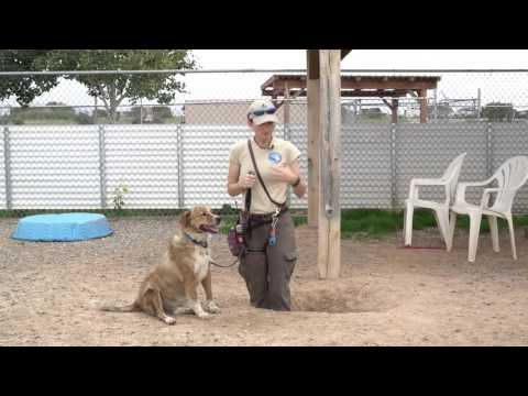 Training tip tuesday - how to get dogs to stop digging