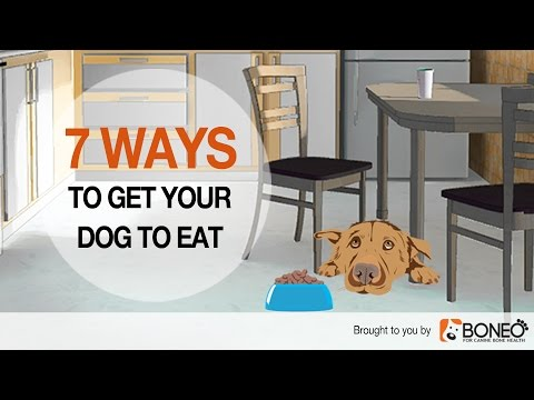 Dog won't eat? 7 ways to overcome loss of appetite in dogs