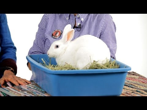 Can rabbits be litter trained?   pet rabbits