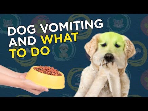 Dog vomiting and what to do