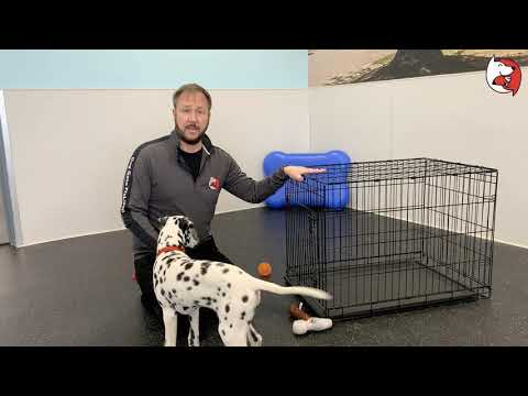 Dgp puppy class video - force free kennel training