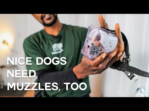 Dog muzzles: why they are good, and where to start   itty's muzzle ep. 1