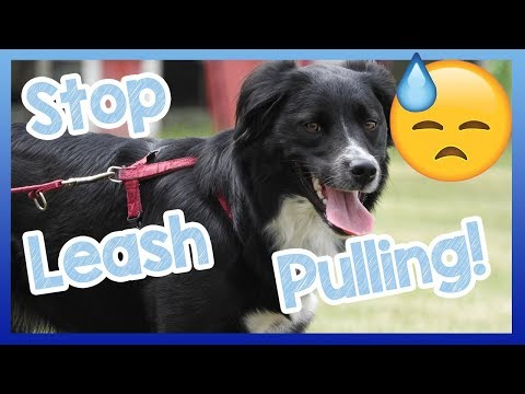 Stop leash pulling! how to stop your dog pulling on the lead when walking! teach your dog to heel!