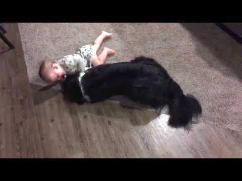 Baby and border collie being adorable!