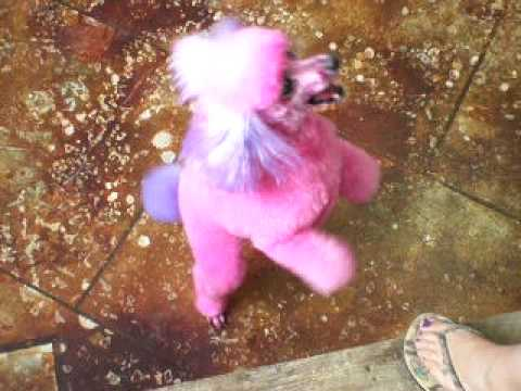 Skeeter the pink poodle at itzaclip! doggy day spa