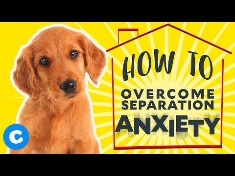 How to help your puppy overcome separation anxiety   chewy