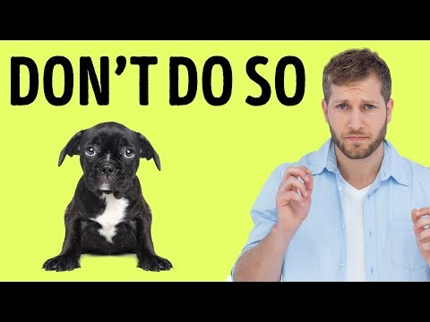 12 things your dog hates about you
