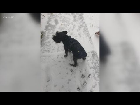 Coyote attacked and killed mentor family's dog