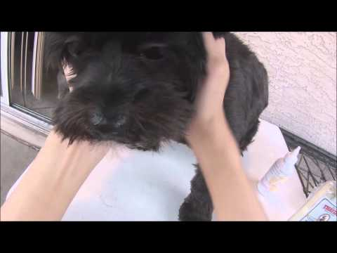 How to clean dog's ear