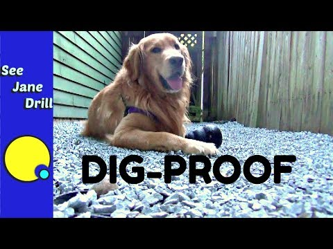 How to build an outdoor pet area your dog will love