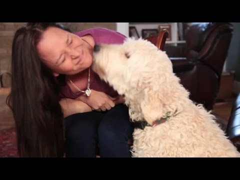 Why does my dog lick me?