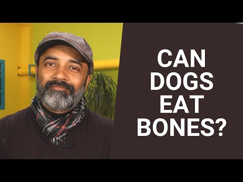Can dogs eat bones?