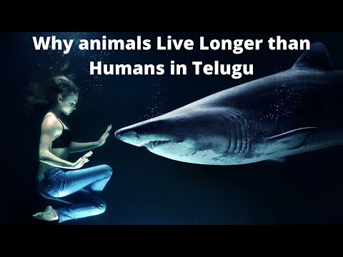 Why animals live longer than humans in telugu   why humans have less life then animals  kiran varma