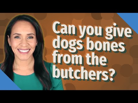 Can you give dogs bones from the butchers?