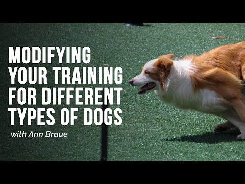 Modifying your training for different types of dogs with ann braue