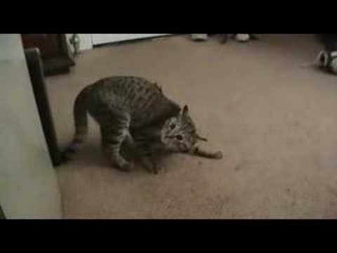 Cat with awful gas