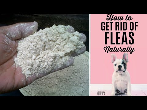 Diatomaceous earth to get rid of fleas on dogs and cats does it really work