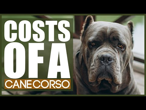 How much does a cane corso cost?