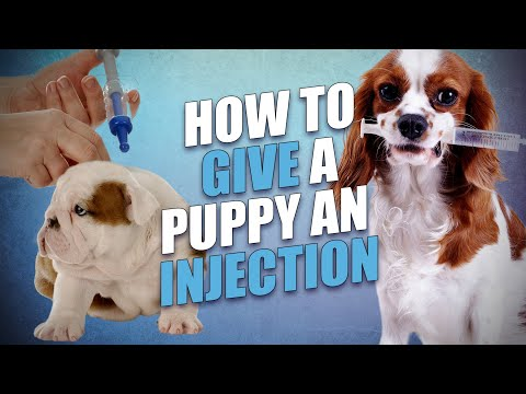 How to give a puppy a shot safely (and what you must know beforehand)