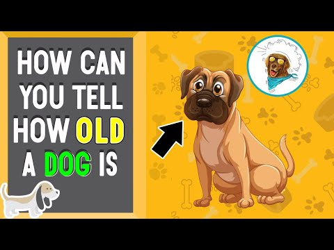 How can you tell how old a dog is?
