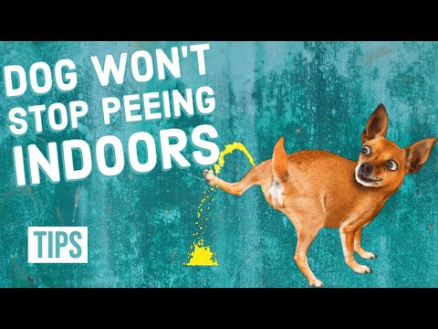 How to stop your dog from peeing indoors