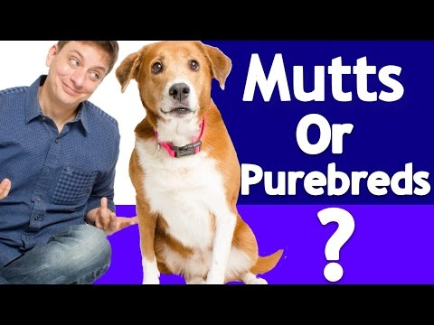 Which is better? purebred or mixed breeds? the answer is in the dna!