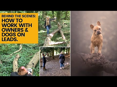 Dog photoshoot - how to work with clients and photograph dogs on leashes for easy editing!