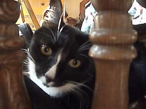 Dobby being cute - whiskers animal benevolent league