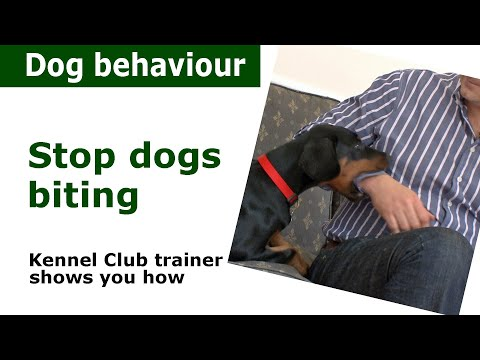 How to stop a puppy from biting | expert advice from a kennel club expert