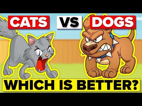 Why are dogs better than cats?