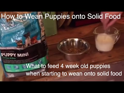 What to feed 4 week old puppies when starting to wean onto solid food part 1