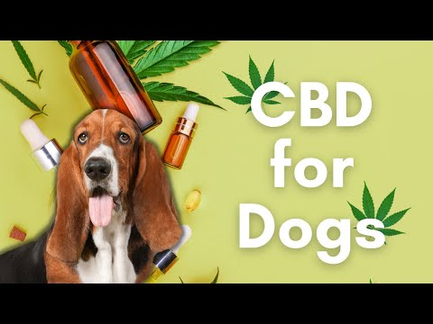 Cbd hemp oil for dogs | benefits, side effects, and will it make my dog high?