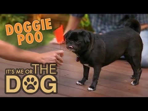 How to stop dogs from eating poop | it's me or the dog