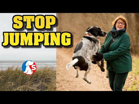 How to stop my dog from jumping on people