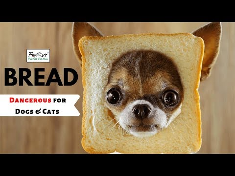 Death in dogs & cats due to bread dough | dr. anirudh mittal | pupkitt pet care