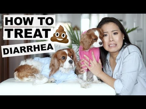 How to treat diarrhea at home   dog tips 101   tricks to stop diarrhea in dogs