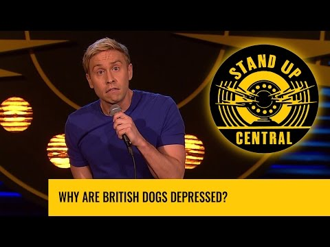 Why are british dogs depressed?