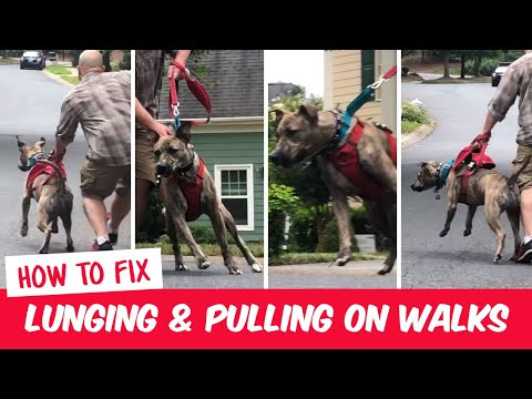 How to stop your dog from lunging & pulling on the leash