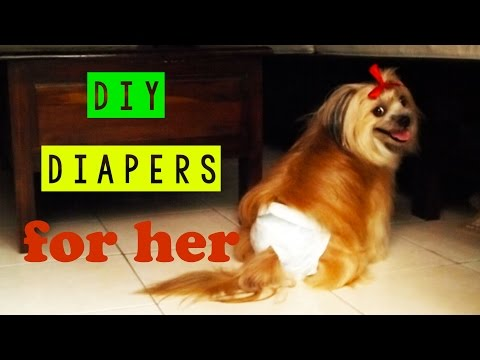Dog on her period - care dog menstrual diy diapers - dog's heat cycle