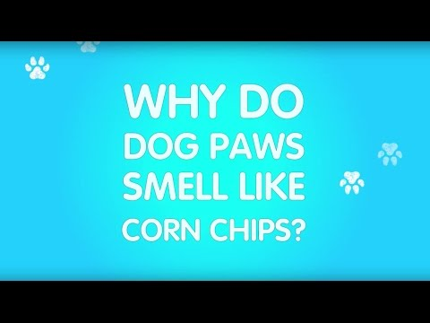 Why do dogs paws smell like corn chips?