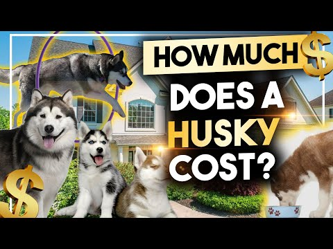How much does a husky cost?